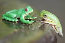 The Two Frogs Tale