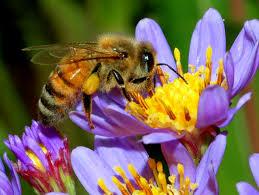 National Honey Bee Awareness Day